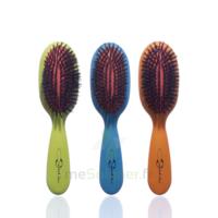 Cartel Brosse Cheveux Pneumatique Sanglier /1